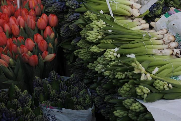IMG_6978 Columbia Road Flower Market s