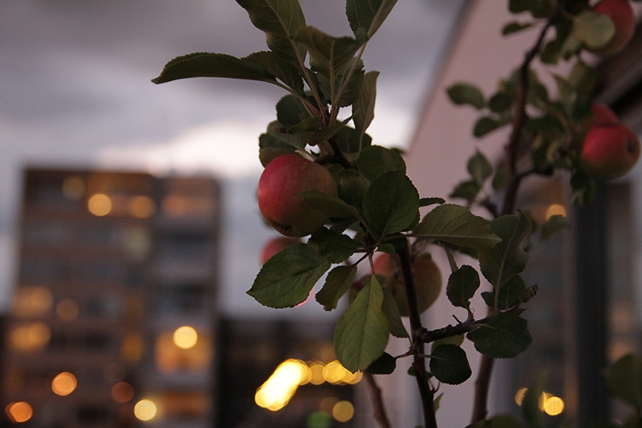 IMG_3161s Urban Apples before the storm @AnneBernecker
